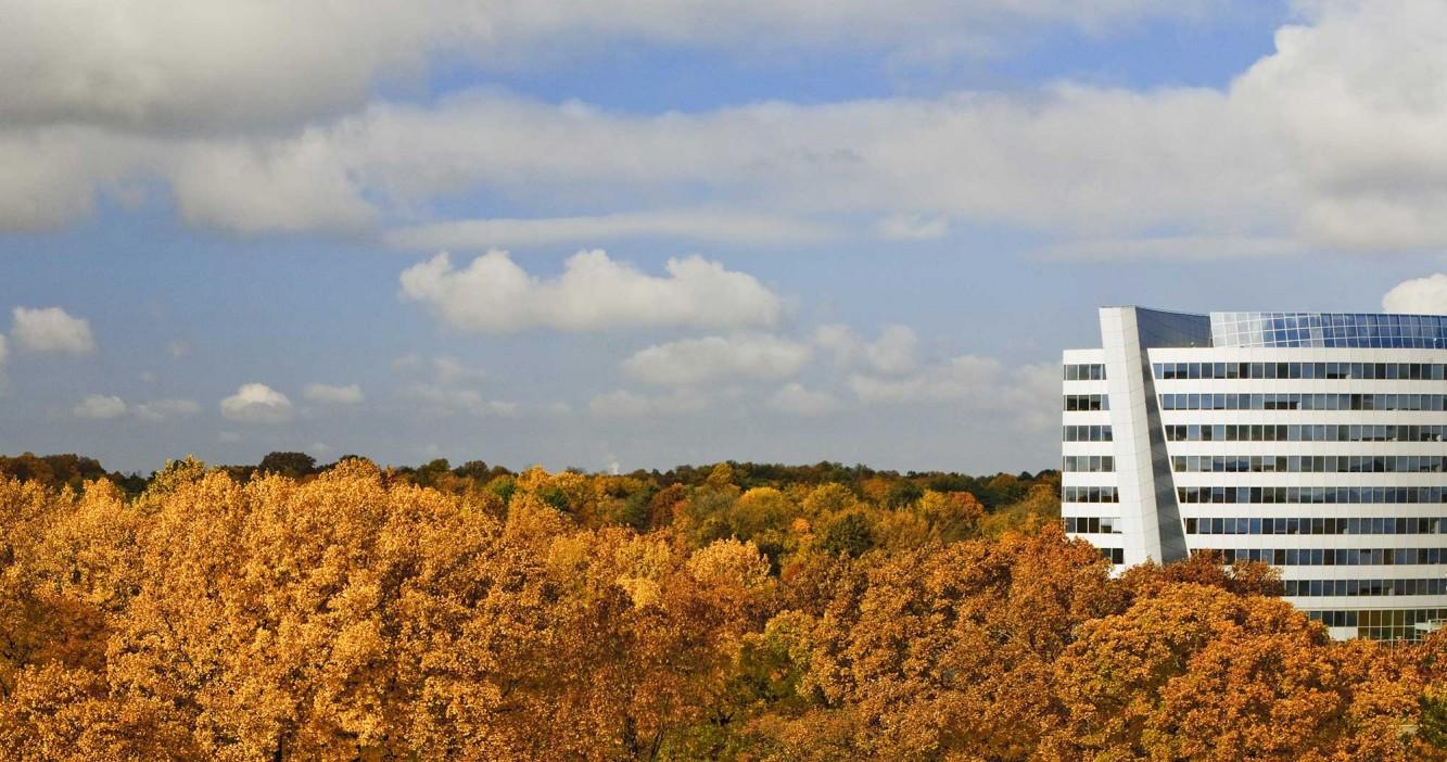 Building Autumn Trees
